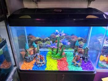 A 1 Aquarium