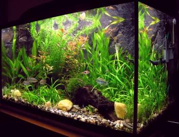 A One Aquarium & Pets