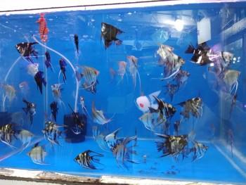 Acharyas Aquarium & Pets