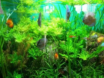Aishwarya Fish Aquarium