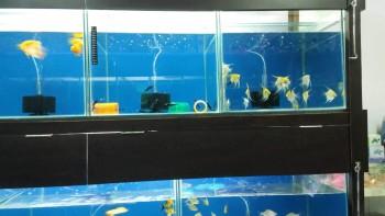 Ajinkya Aquatic & Pet World