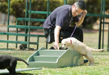 Akshar Dog Training Centre