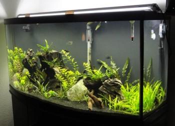 Amazon Aquarium