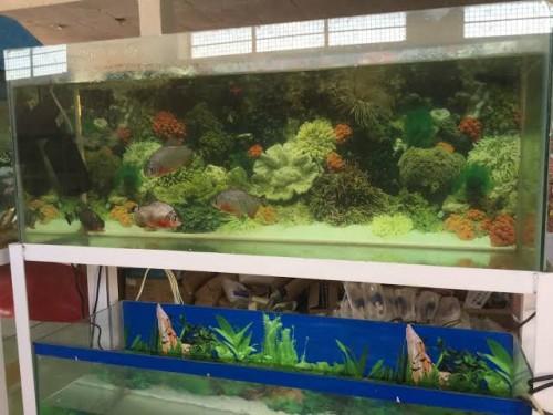 Angel Aquarium