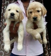 Amit Pet Shop