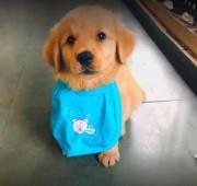 Mumbai Pet Shop