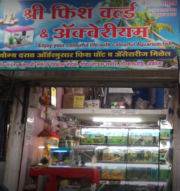 Shree fish world and aquarium