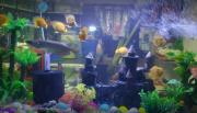 Fish Hobby Center