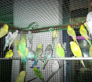 Ganga Birds And Fish Emporium