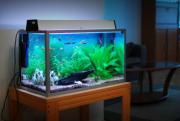 Fishland Aquarium